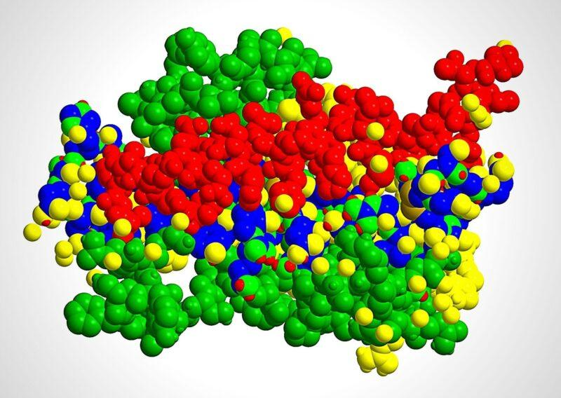 Молекулярная структура гормона роста