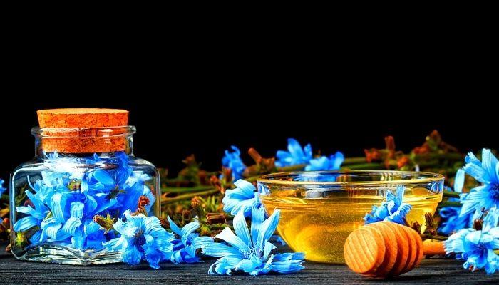Цикорий - цветы